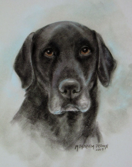 Pastel Portrait of Labrador Retriever