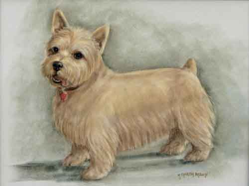 norwich terrier pastel portait