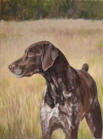 dog portrait german short haired pointer