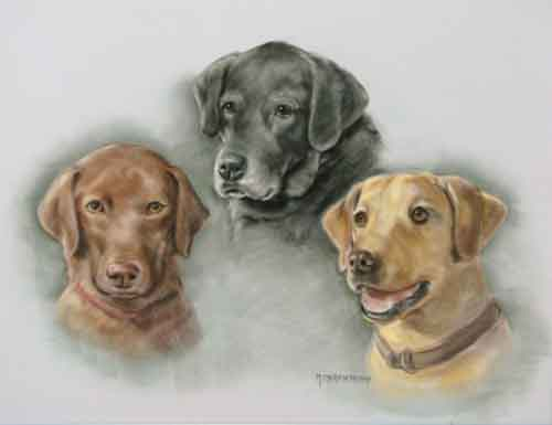 Pastel Portait Three labs