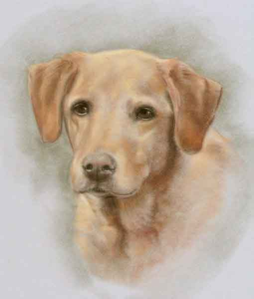 pastel portrait dog