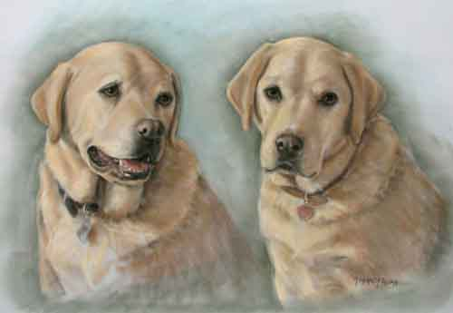 Pastel Portait Yellow Labs